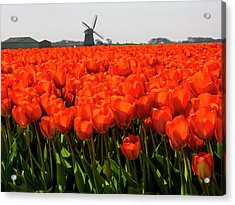 Netherlands, Nord Holland, Field Acrylic Print