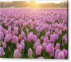 Netherlands, Nord Holland, Selective Acrylic Print