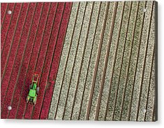 Netherlands, Tractor In Tulip Fields Acrylic Print by Peter Adams