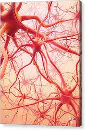 Neural Network Acrylic Print