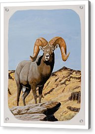 Nevada California Bighorn Acrylic Print