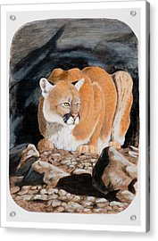 Nevada Cougar Acrylic Print