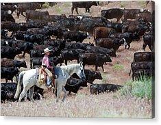Nevada Cowboy Herding Cattle Acrylic Print by Jim West
