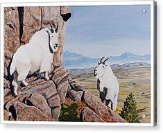 Nevada Mountain Goats Acrylic Print