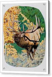 Nevada Nontypical Elk Acrylic Print