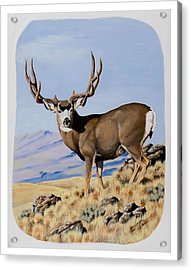 Nevada Typical Mule Deer Acrylic Print