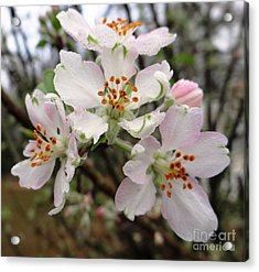 Acrylic Print featuring the photograph New Beginnings by Ecinja Art Works
