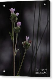New Beginnings Acrylic Print by Joy Hardee