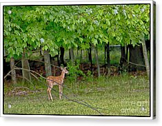 New Beginnings Acrylic Print by Timothy J Berndt