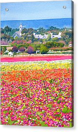 New Carlsbad Flower Fields Acrylic Print