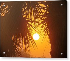 New Day In Paridise Acrylic Print by Will Boutin Photos