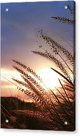 New Day Acrylic Print by Laura Fasulo