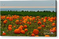 New England Pumpkin Patch Acrylic Print by Eclectic Captures