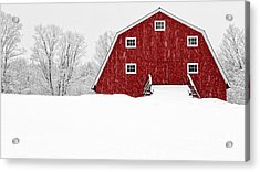 New England Red Barn In Winter Snow Storm Acrylic Print