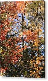 New England Trees Acrylic Print