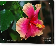 New Every Morning - Hibiscus Acrylic Print