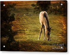 New Forest Acrylic Print by Angel Ciesniarska