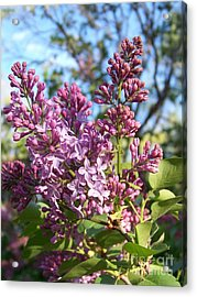 Acrylic Print featuring the photograph Purple Lilac by Eunice Miller