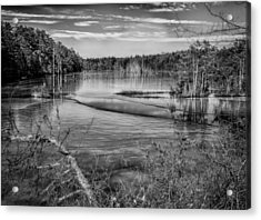 New Jersey Pinelands Acrylic Print