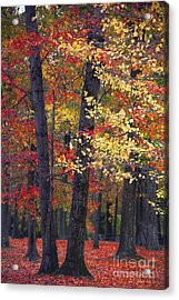 New Jersey's Reds Acrylic Print by Marco Crupi