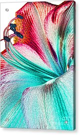 Acrylic Print featuring the digital art New Kid In Town by Margie Chapman