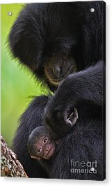 New Life Acrylic Print by Ashley Vincent