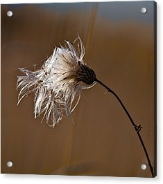 Acrylic Print featuring the photograph New Life Is Comming by Leif Sohlman