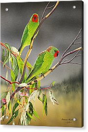 New Life - Little Lorikeets Acrylic Print by Frances McMahon