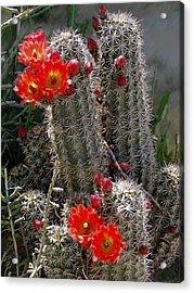 New Mexico Cactus Acrylic Print