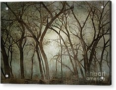 New Mexico Winter Woodland Acrylic Print by Andrea Hazel Ihlefeld