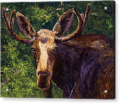 Loose Moose Acrylic Print by Mary Giacomini