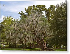 New Orleans Spanish Moss Acrylic Print