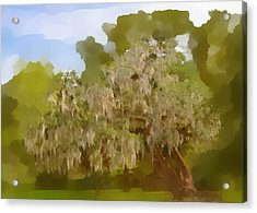 New Orleans Spanish Moss On Live Oaks Acrylic Print