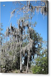 New Orleans - Swamp Boat Ride - 1212128 Acrylic Print by DC Photographer