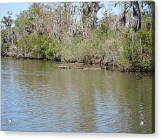 New Orleans - Swamp Boat Ride - 1212157 Acrylic Print by DC Photographer