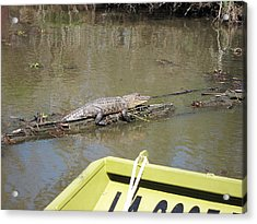 New Orleans - Swamp Boat Ride - 1212160 Acrylic Print by DC Photographer