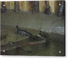 New Orleans - Swamp Boat Ride - 12126 Acrylic Print by DC Photographer