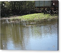 New Orleans - Swamp Boat Ride - 121274 Acrylic Print