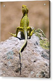 New Photographic Art Print For Sale Lizard Back Ghost Ranch New Mexico Acrylic Print