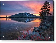 New Years Day Sunset With Berries Acrylic Print