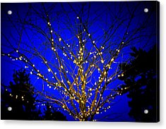 Acrylic Print featuring the photograph New York Botanical Garden Holiday Tree by Aurelio Zucco