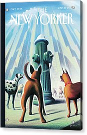 New Yorker June 27th, 2005 Acrylic Print by Eric Drooker