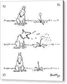 New Yorker May 22nd, 1978 Acrylic Print