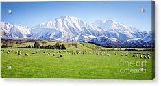 New Zealand Farmland Panorama Acrylic Print by Colin and Linda McKie