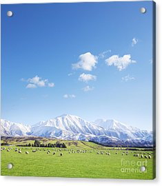 New Zealand Farmland Square Acrylic Print by Colin and Linda McKie