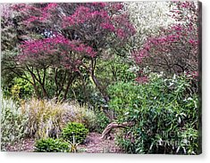 Acrylic Print featuring the photograph New Zealand Tea Tree II by Kate Brown
