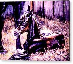 Newborn Foal Acrylic Print by Stan Esson
