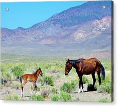 Acrylic Print featuring the photograph Newborn Mustang Foal by Marilyn Diaz