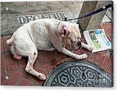 Newsworthy Dog In French Quarter Acrylic Print by Kathleen K Parker