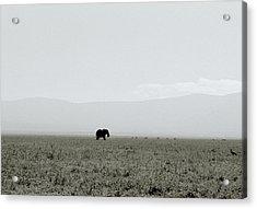 Ngorongoro Crater Acrylic Print by Shaun Higson